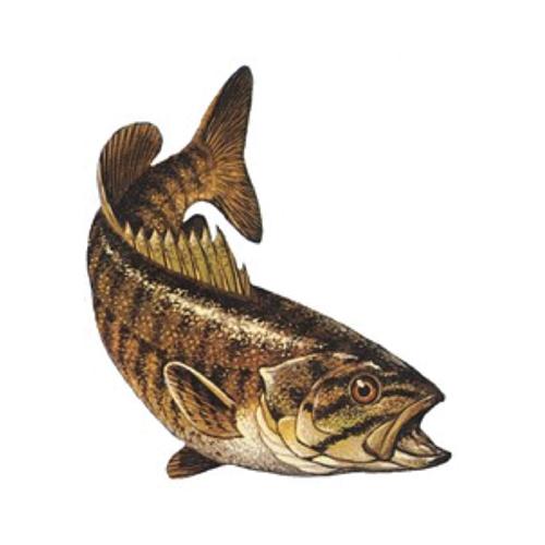 Horsetooth Bass