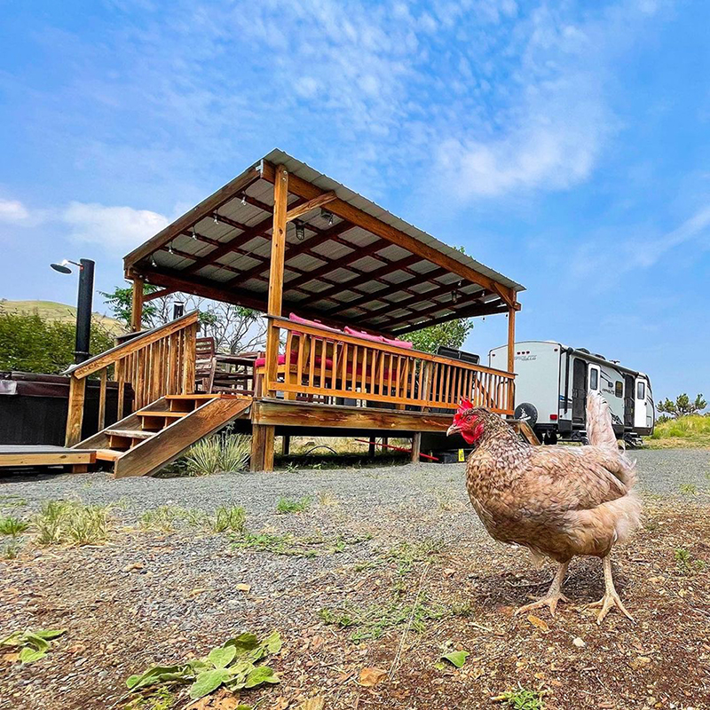 Chickens on Property