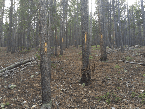 Donner Haunted Trail