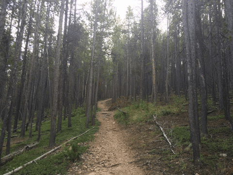 Hiking Donner Trail