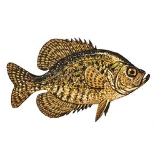 Horsetooth Panfish