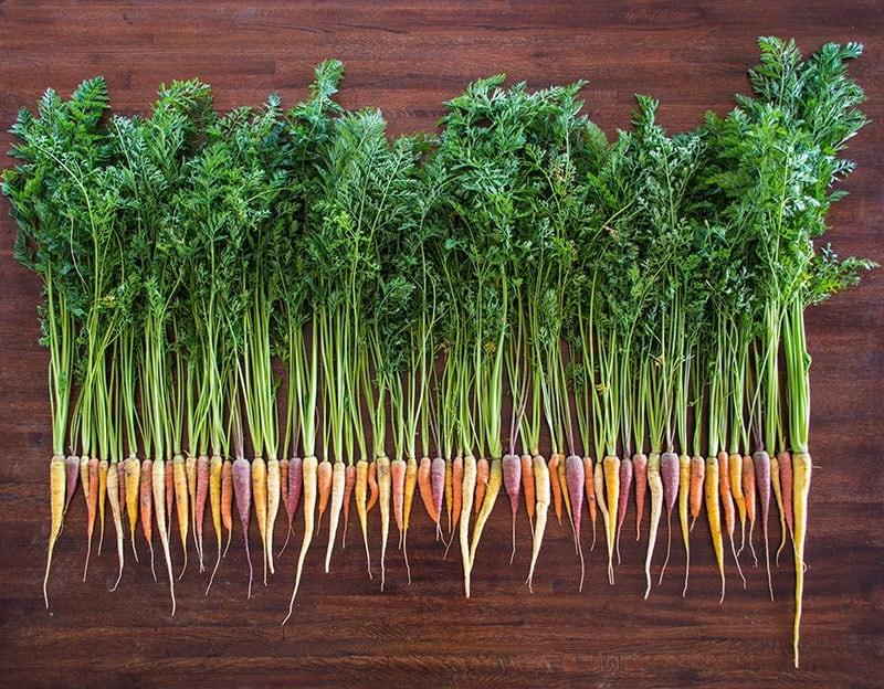 SeedsTrust Carrots