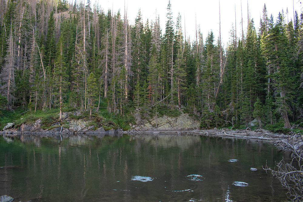 Stocked Fish Lake Agnes