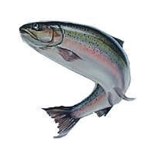 Horsetooth Trout
