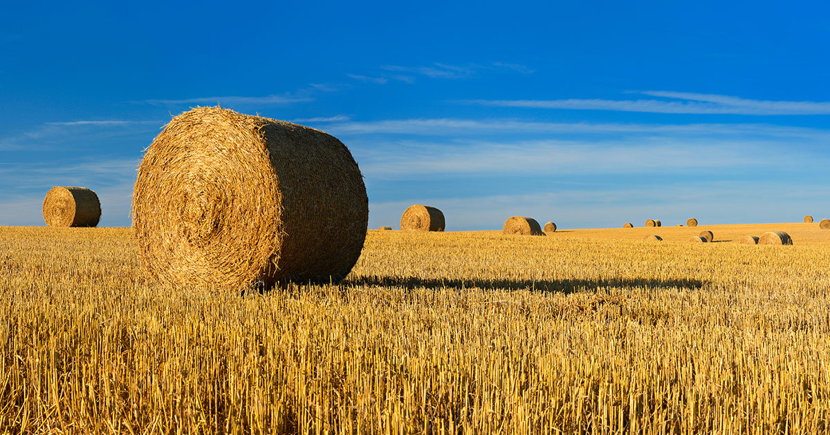 Difference between hay and straw